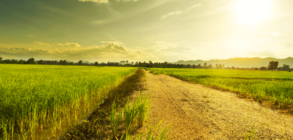 What To Consider Before Buying Land